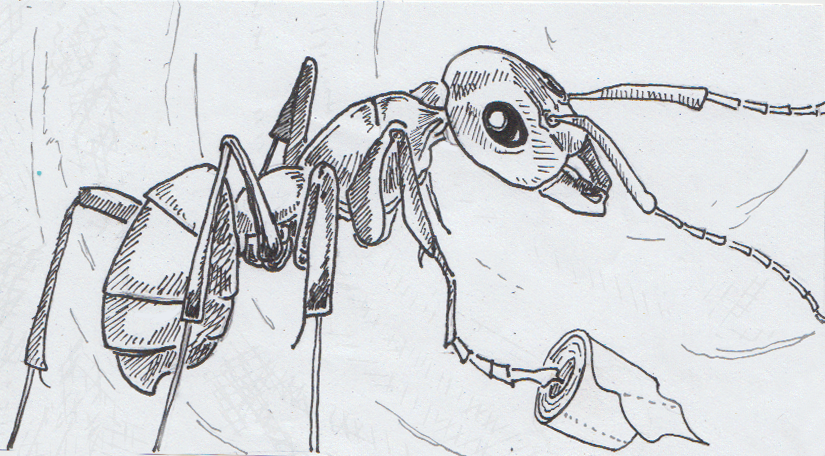 Do Ants Use the Loo? – A new entomology, zoology thing for curious ...