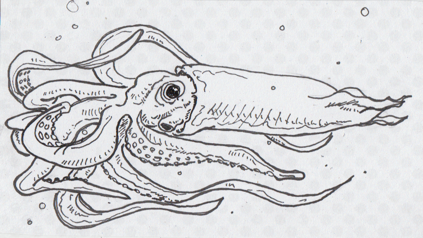 Drawing of the extinct squid Haboroteuthis poseidon
