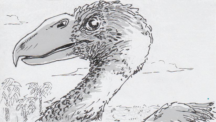 Terror bird's senses modeled thanks to well-preserved skeleton and skull