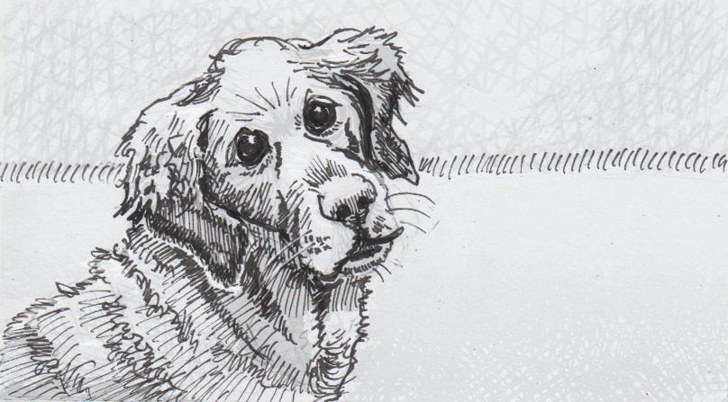 Drawing of a Golden Retriever