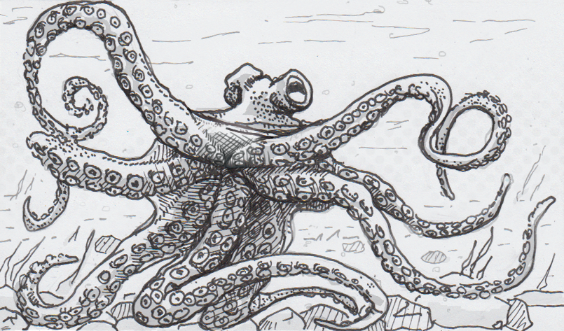 Drawing of an octopus