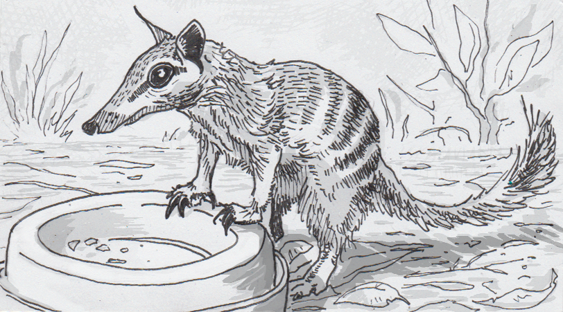 Drawing Of A Numbat Waiting To Be Fed