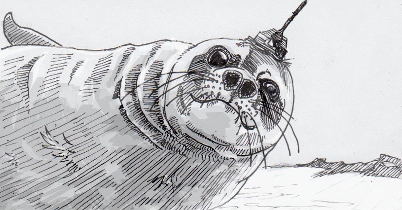 Crowdsourcing oceanic data with the help of cyborg seals – A