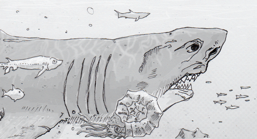 Drawing of Carcharocles Megalodon