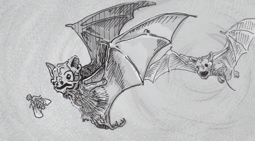 Drawing of two Mexican free-tailed bats