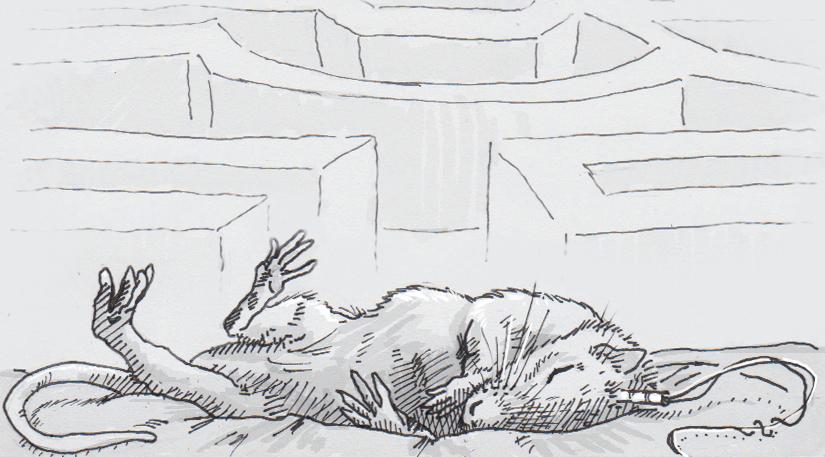 Stifled rats solve mazes while they slumber
