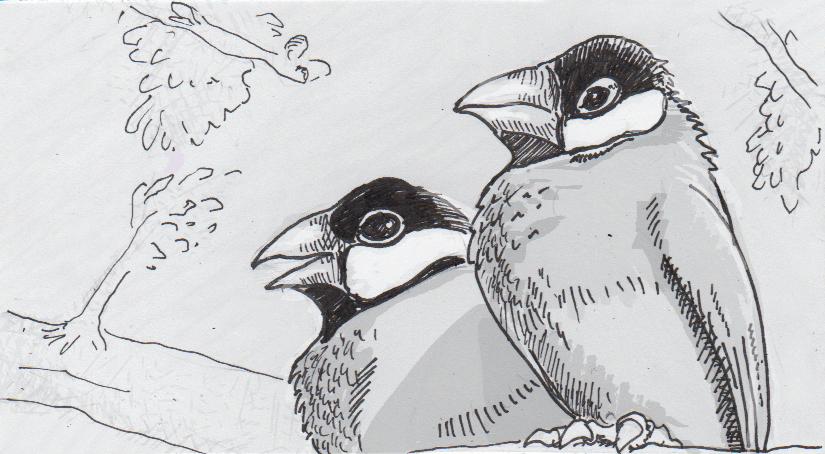 Bird ballads boosted with beak beats