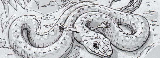 Drawing of Tetrapodophis amplectus