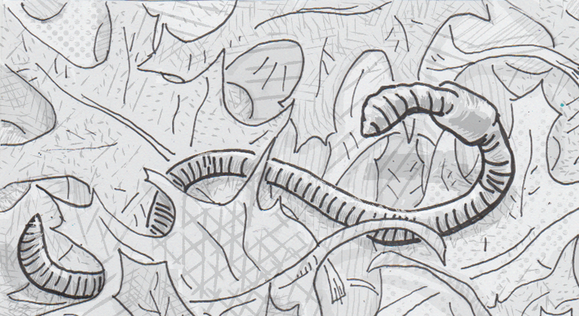 Drawing of earthworm in leaf litter