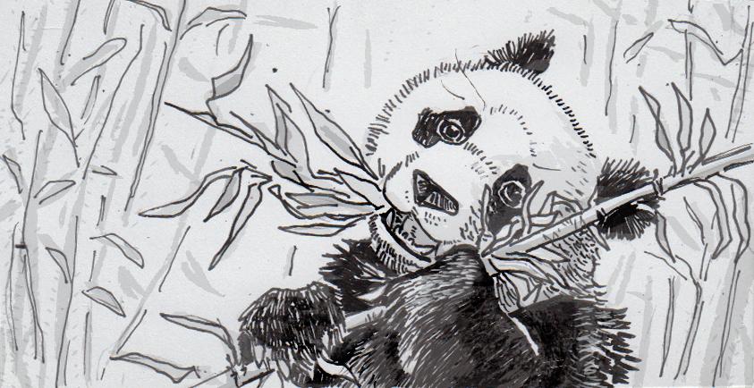 Drawing of a giant panda eating bamboo