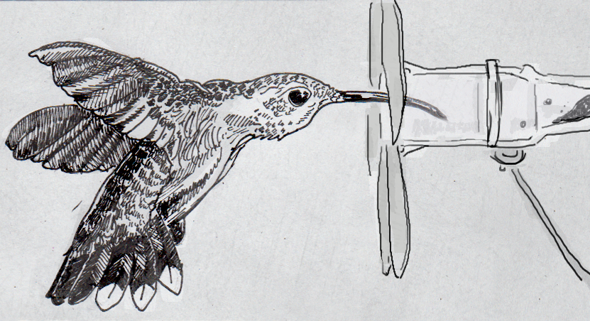 The Truth About Hummingbirds Tubular Tongues A New Anatomy Thing