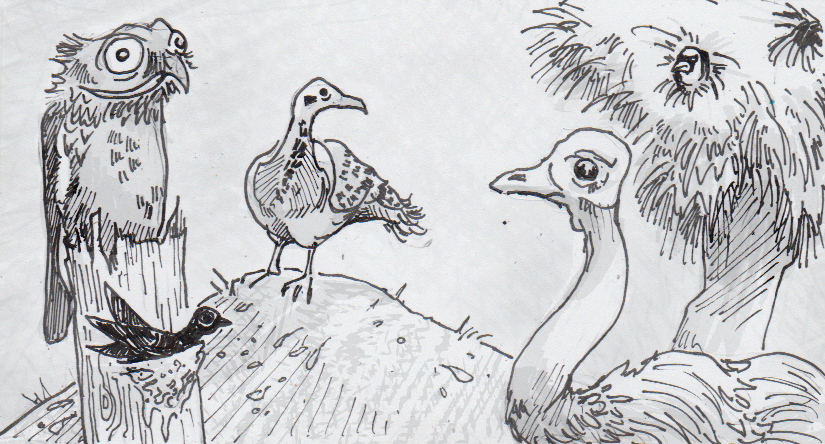 Drawing of various birds and their nests
