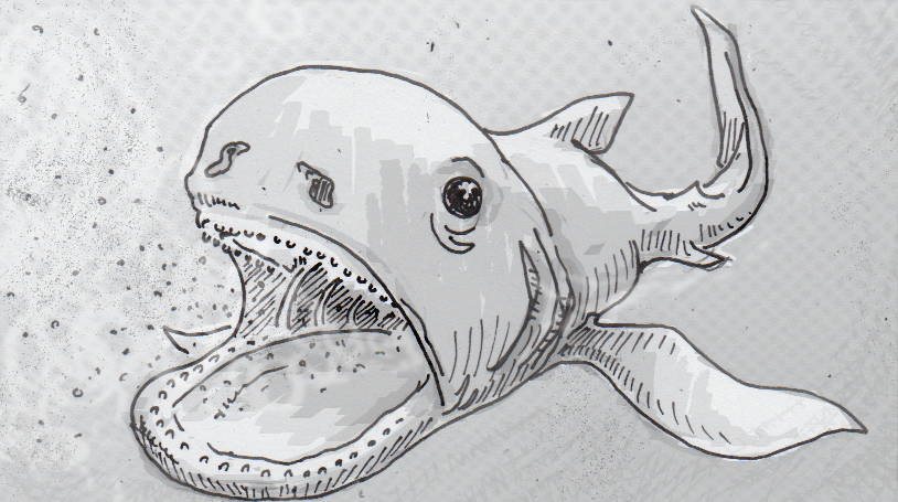 Drawing of a megamouth shark