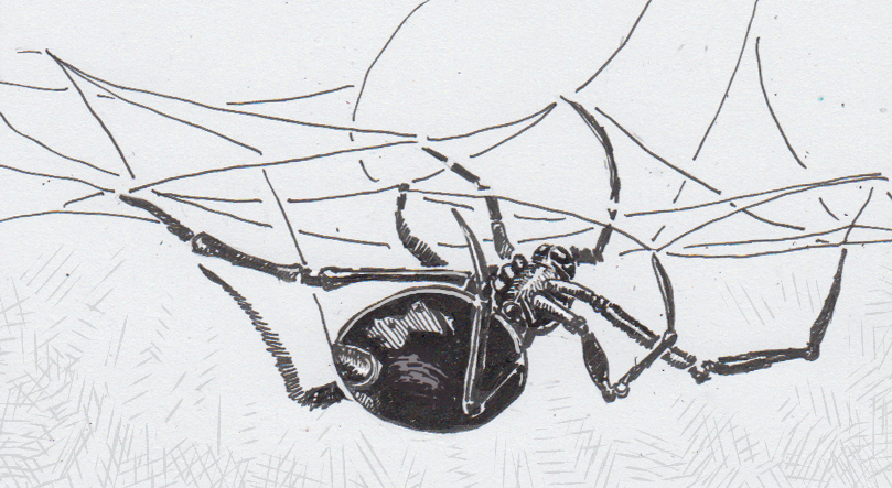 The Fears And Facts Of Black Widows Fame A New Entomology