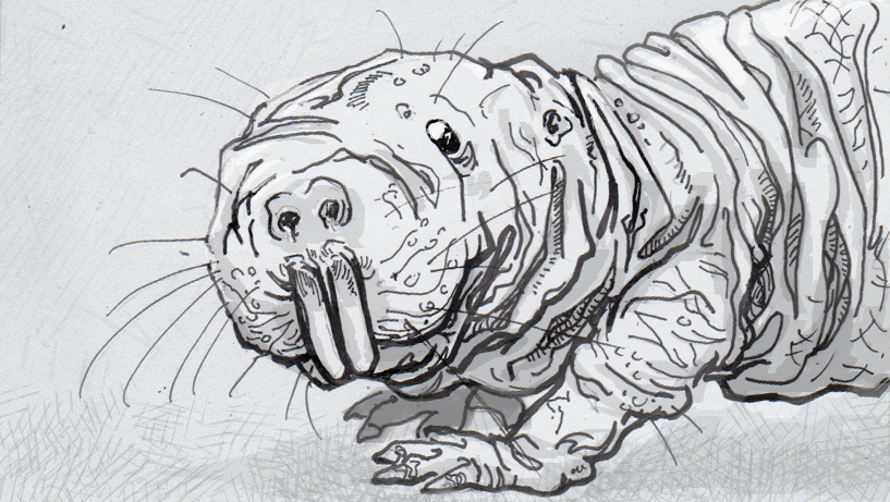 drawing of a naked mole rat