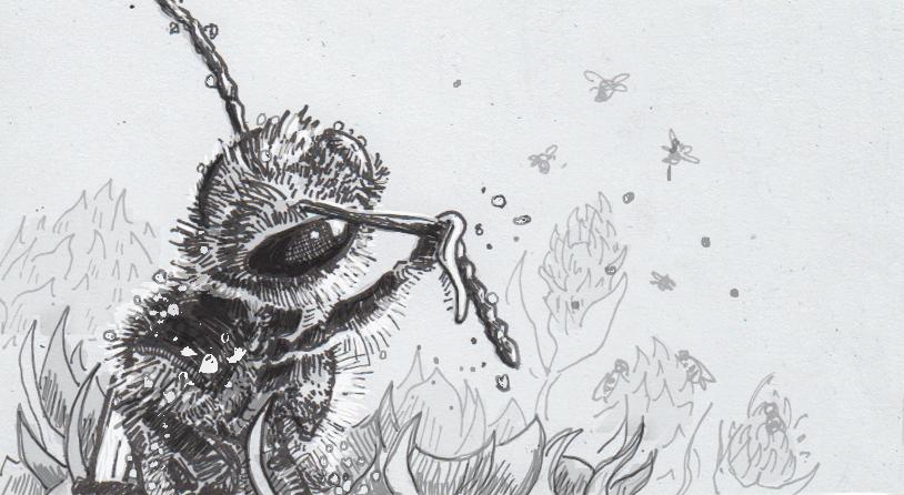 Drawing of a bathing honeybee