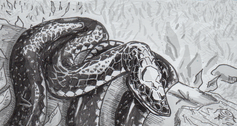Snakes Skull Structures Suggest Subterranean Origins A New
