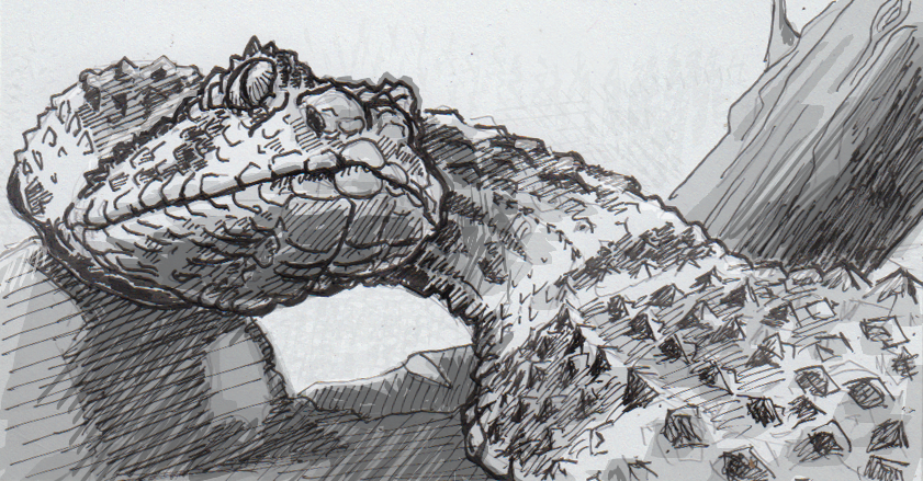 Drawing of a puff adder
