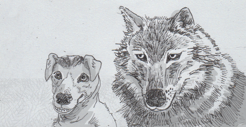 Drawing of a dog and a wolf