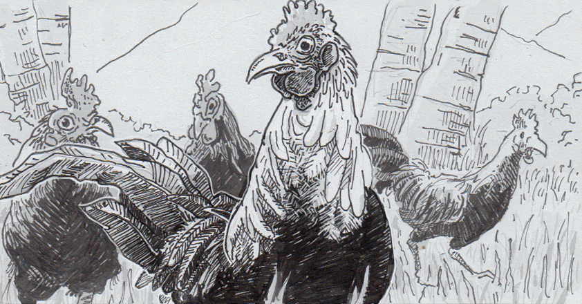 Drawing of wild chickens in Hawaii