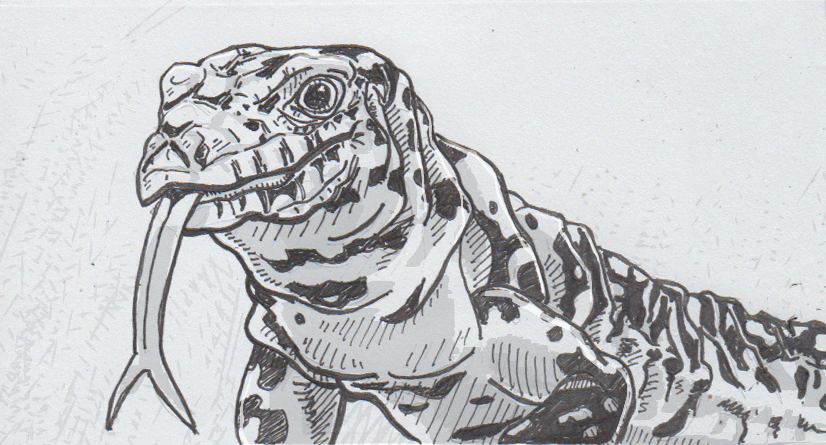 Drawing of an Argentine black and white tegu