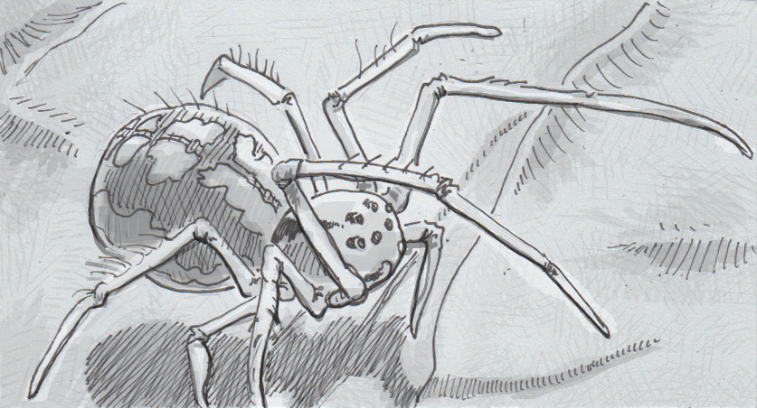 Drawing of a cobweb spider