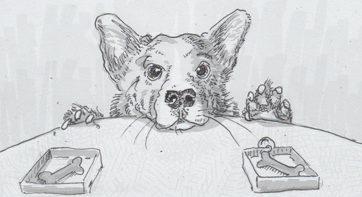Drawing of a stealthy corgi