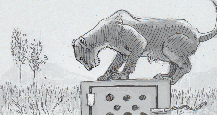 Drawing of an African lioness on a puzzle box