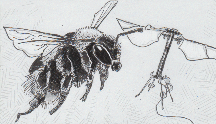 Drawing of bumblebee and a robobee