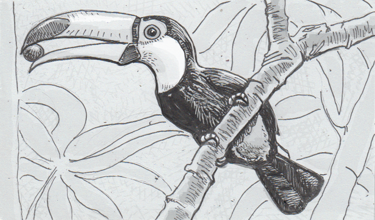 Toucans beat the heat with bafflingly big beaks – A new anatomy ...