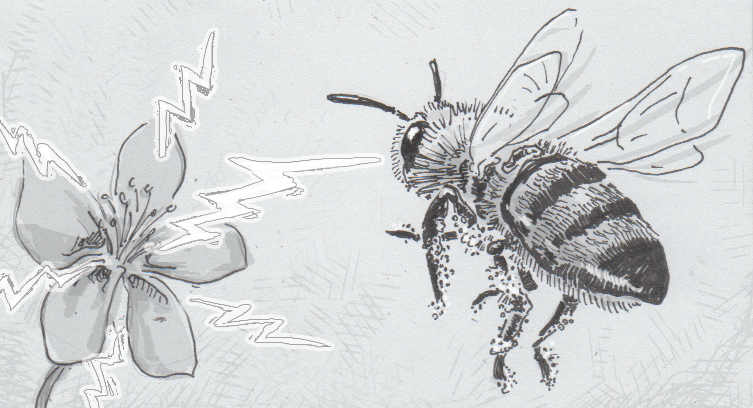 Drawing Of A Bee Noticing An Electric Field From Flower