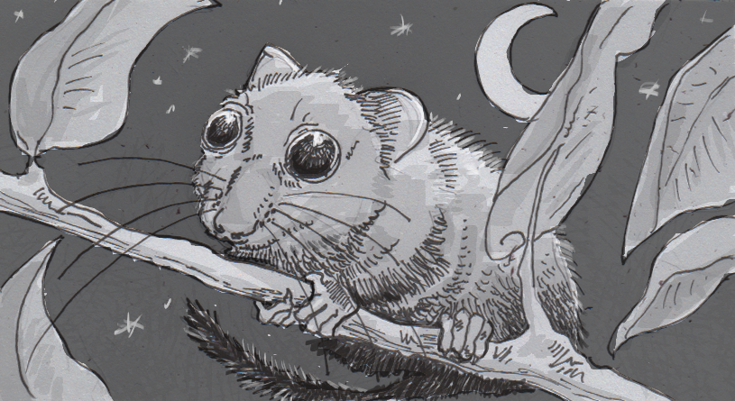 Drawing of a Hazel dormouse at night