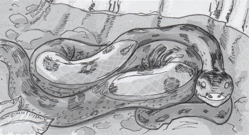 Drawing of a green anaconda