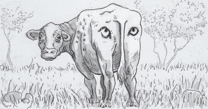 Drawing of a cow with painted eyespots
