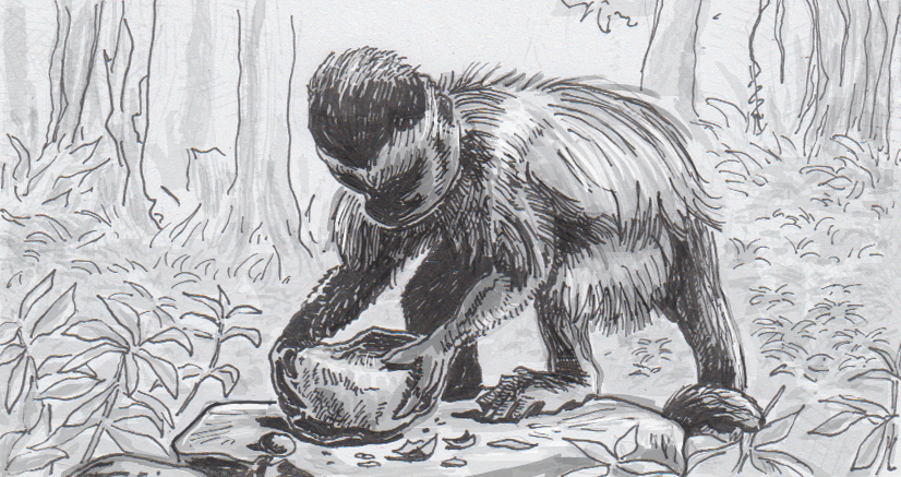 Drawing of a capuchin monkey breaking open cashews