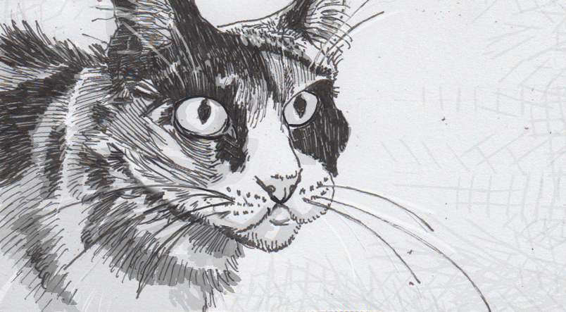 Drawing of a calico house cat