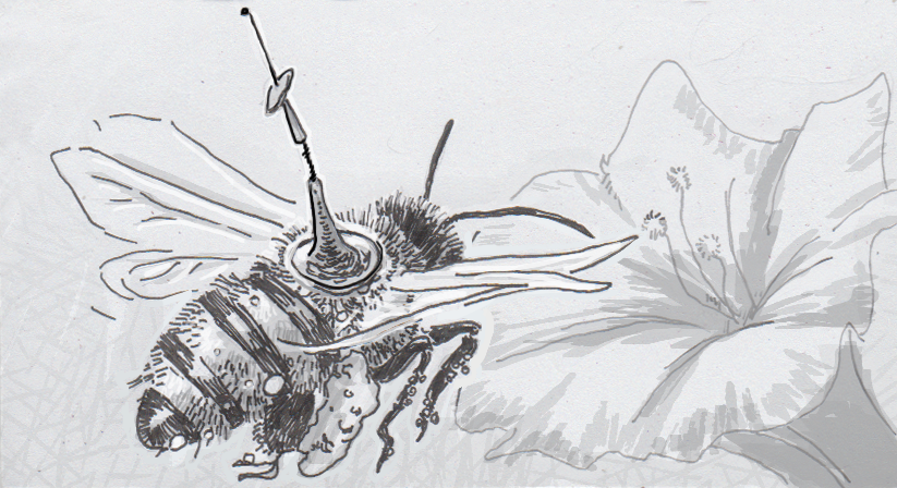 Drawing of a honeybee with a radio transmitter