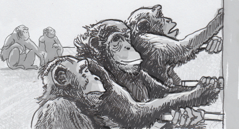 Drawing of chimpanzees cooperating to open a gate