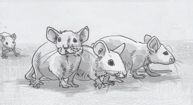 Drawing of four mice
