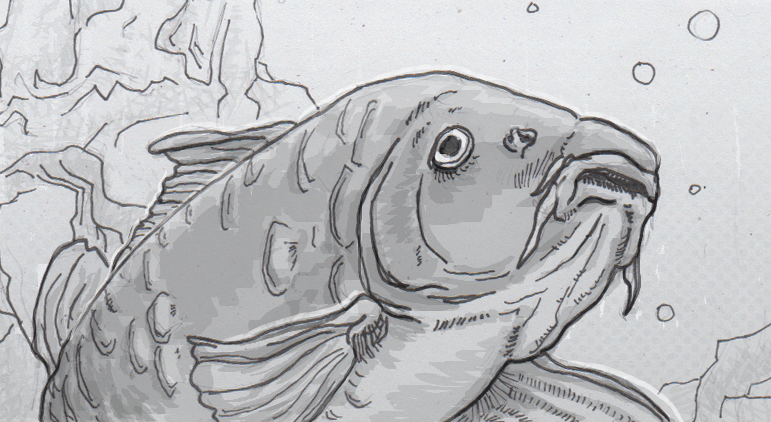 Drawing of a mirrored carp