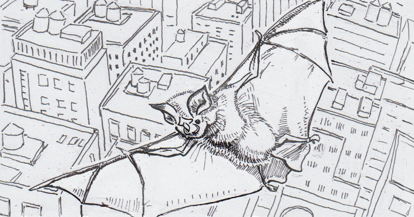 Drawing of a horseshoe bat flying over a noisy city