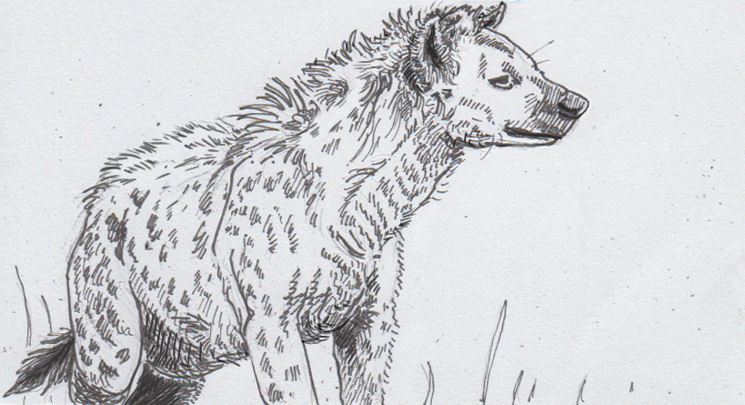 10-16-16 - Spotted hyena