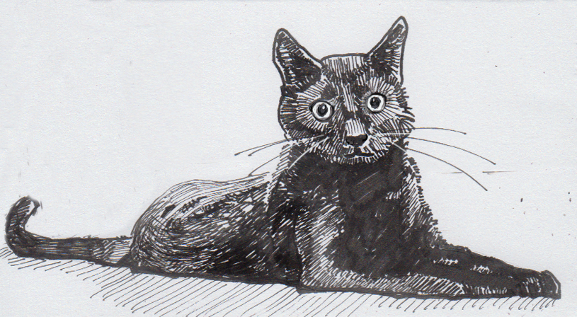 Drawing of a black house cat