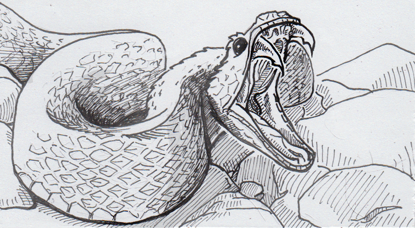 Drawing of Trimeresurus stejnegeri