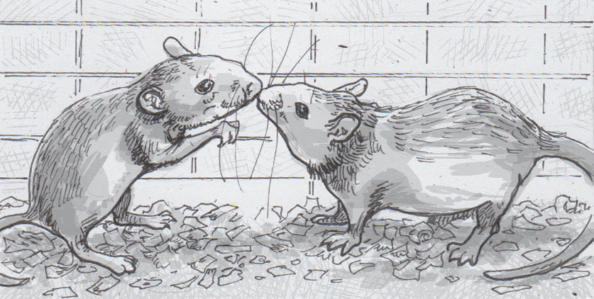 Drawing of two lab mice sniffing each other