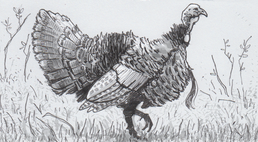 The multitude of misunderstandings behind (mis)titling turkeys