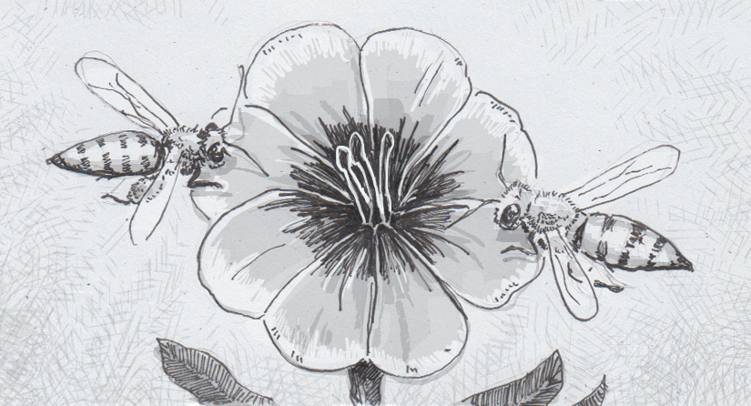 Drawing of bees visiting a flower