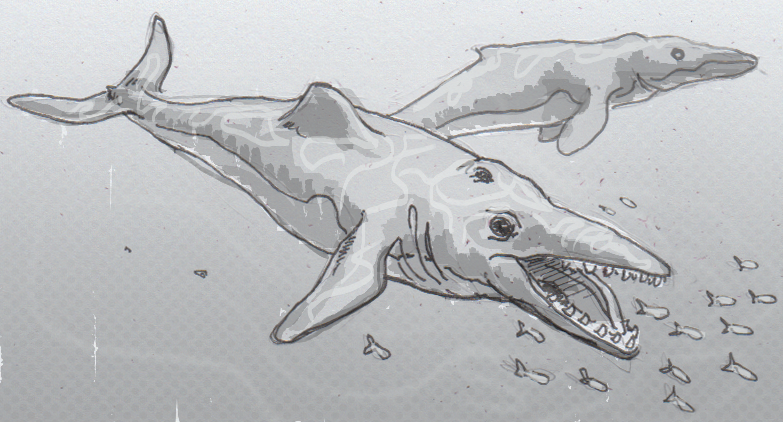Drawing of Aetiocetid whales