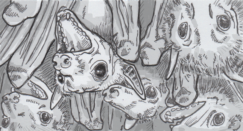 Drawing of chatty Egyptian fruit bats