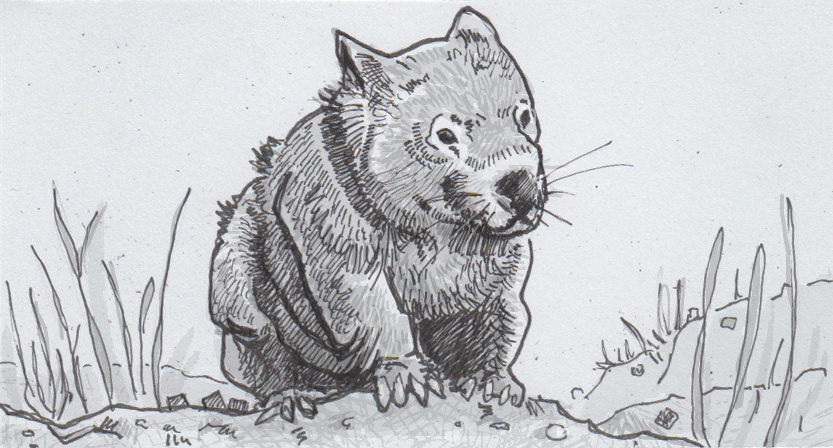 Wombat digestion slowly shapes their strangely square